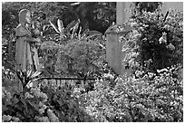 Flowers in yard of Convent of St Monica , Old Goa. Goa, India ( black and white)