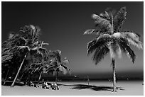 People sitting on bench below palm trees at twilight, Miramar Beach. Goa, India ( black and white)