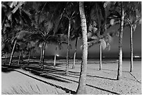 Palm trees and Miramar Beach at twilight. Goa, India ( black and white)