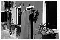 Multicolored houses and flowers,  Burano. Venice, Veneto, Italy ( black and white)