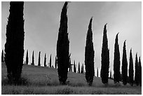 Pictures of Tuscany countryside
