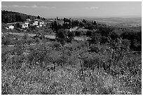 Flowers and rural landscape, Chianti region. Tuscany, Italy (black and white)