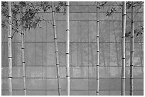Bamboo reflected in marble wall, Dongdaemun Design Plaza. Seoul, South Korea (black and white)
