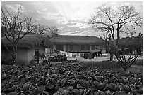 Cabbage field and rural house at sunset. Hahoe Folk Village, South Korea (black and white)