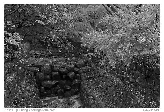 Landscaped creek in autumn, Bulguksa. Gyeongju, South Korea (black and white)