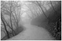 Path in fog, Seokguram. Gyeongju, South Korea (black and white)