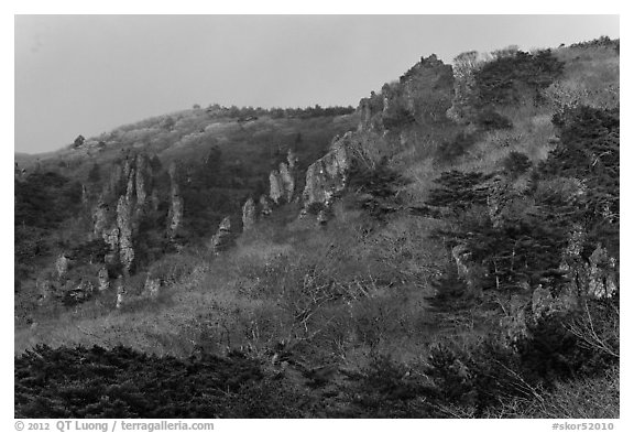 Forest and pinnacles, Hallasan National Park. Jeju Island, South Korea