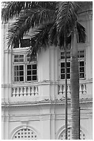 Palm and facade detail, city hall. George Town, Penang, Malaysia (black and white)