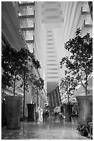 Potted trees inside Marina Bay Sands hotel. Singapore (black and white)