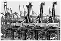 Cranes. Singapore ( black and white)