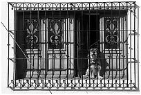 Window with forged metal grid and dog, Tlaquepaque. Jalisco, Mexico (black and white)
