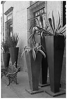 Pots with agaves for sale outside a gallery, Tlaquepaque. Jalisco, Mexico (black and white)