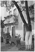 Tree, publich bench, and house on Plazuela San Fernando. Guanajuato, Mexico (black and white)