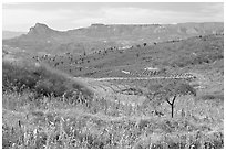 Rural landscape with grasses and agave field. Mexico ( black and white)