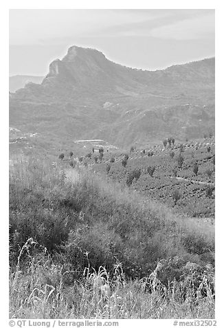 Grasses, agaves, and mountains. Mexico