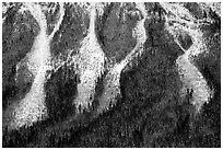 Avalanche gullies. Canada (black and white)