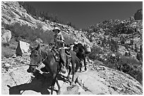 Man driving a pack of horses on trail, lower Dusy Basin. Kings Canyon National Park, California (black and white)