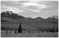 Alaska Range at dusk from near Savage River. Denali National Park, Alaska, USA. (black and white)