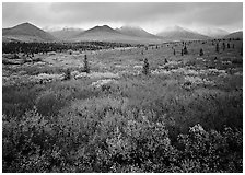 Mosaic of colors on tundra and lower peaks in stormy weather. Denali National Park, Alaska, USA. (black and white)