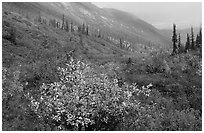 Arrigetch Valley in autumn. Gates of the Arctic National Park, Alaska, USA. (black and white)