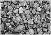 Rocks covered with mussels at low tide, Muir inlet. Glacier Bay National Park, Alaska, USA. (black and white)