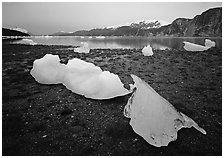 Icebergs near Mc Bride glacier, Muir inlet. Glacier Bay National Park ( black and white)