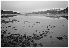 Mud flats near Mc Bride glacier, Muir inlet. Glacier Bay National Park, Alaska, USA. (black and white)