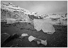 Translucent icebergs at the base of Lamplugh Glacier, morning. Glacier Bay National Park ( black and white)