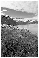 Lupine, Lamplugh glacier, and the Bay seen from a high point. Glacier Bay National Park, Alaska, USA. (black and white)