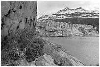 Rock ledge with dwarf fireweed, Lamplugh glacier, and Mt Cooper. Glacier Bay National Park, Alaska, USA. (black and white)