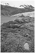 Beach with seaweed exposed at low tide in Reid Inlet. Glacier Bay National Park, Alaska, USA. (black and white)