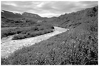 Wildflowers and Lethe river at the edge of the Valley of Ten Thousand smokes. Katmai National Park, Alaska, USA. (black and white)