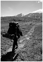 Backpacker follow bear tracks, Valley of Ten Thousand smokes. Katmai National Park, Alaska (black and white)