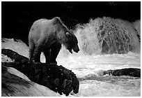 Pictures of Bears