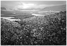 Wildflowers, pumice, and distant peaks in storm, Valley of Ten Thousand smokes. Katmai National Park, Alaska, USA. (black and white)