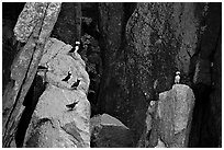Puffins on cliff. Kenai Fjords National Park ( black and white)