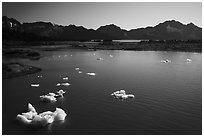 Aerial View of icebergs in Pedersen Lagoon. Kenai Fjords National Park ( black and white)