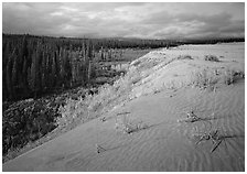 The edge of the Great Sand Dunes with boreal forest below. Kobuk Valley National Park, Alaska, USA. (black and white)