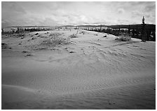 Dune field with boreal forest in the distance. Kobuk Valley National Park, Alaska, USA. (black and white)