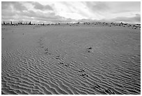 Caribou tracks and ripples in the Great Sand Dunes. Kobuk Valley National Park, Alaska, USA. (black and white)