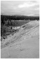 The edge of the Great Sand Dunes with the boreal taiga. Kobuk Valley National Park, Alaska, USA. (black and white)
