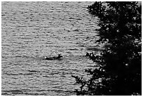 Spruce and lone caribou swimming across the river. Kobuk Valley National Park, Alaska, USA. (black and white)