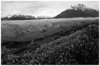 Wildflowers, Mt Donoho above Root glacier. Wrangell-St Elias National Park, Alaska, USA. (black and white)