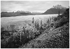 Late wildflowers, trees in autumn colors, and Root Glacier. Wrangell-St Elias National Park, Alaska, USA. (black and white)
