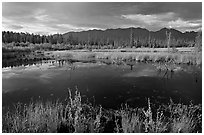 Pond and swamp with dark water. Wrangell-St Elias National Park, Alaska, USA. (black and white)