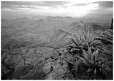 Agave plants overlooking desert mountains from South Rim. Big Bend National Park ( black and white)