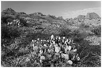 Cactus and Chisos Mountains. Big Bend National Park ( black and white)