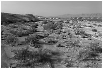 Dry riverbed. Big Bend National Park ( black and white)