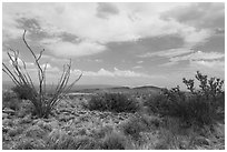 Chihunhuan Desert with dried vegetation. Big Bend National Park, Texas, USA. (black and white)