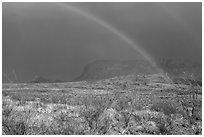 Double rainbow and ocotillos. Big Bend National Park ( black and white)